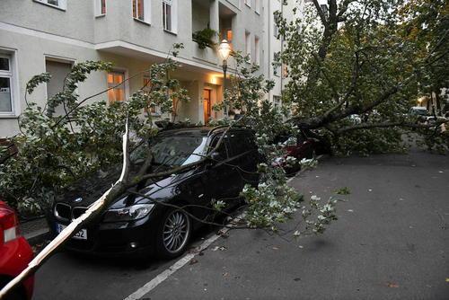 افتادن درختان در اثر توفان در آلمان- برلین