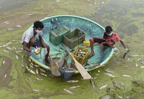 جمع آوری ماهی های مُرده از دریاچه گاندی در حیدر آباد هند