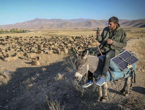 یک دامپرور اهل شهر وان در شرق ترکیه