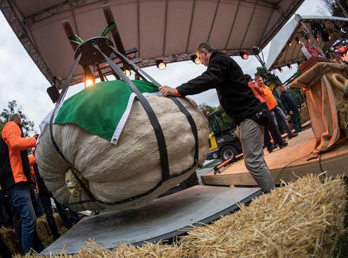 یک کدو تنبل ارسالی از ایتالیا در نمایشگاه سالانه انتخاب بزرگ ترین کدوتنبل های اروپا در آلمان