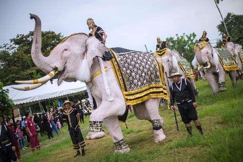 نمایش یک فیل سفید در نخستین سالمرگ پادشاه فقید تایلند