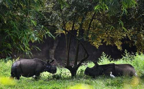 باغ وحش گواهاتی هند