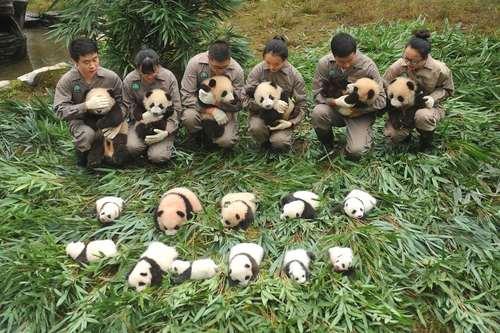 یک مرکز نگهداری از پانداها – چین