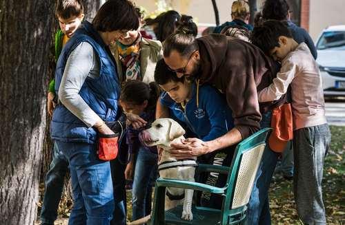 آموزش نحوه نگهداری از سگ های نگهبان به دانش آموزان نابینا در مدرسه ای در بوداپست مجارستان