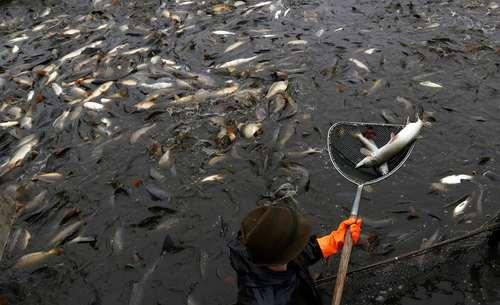 ماهیگیری – جمهوری چک