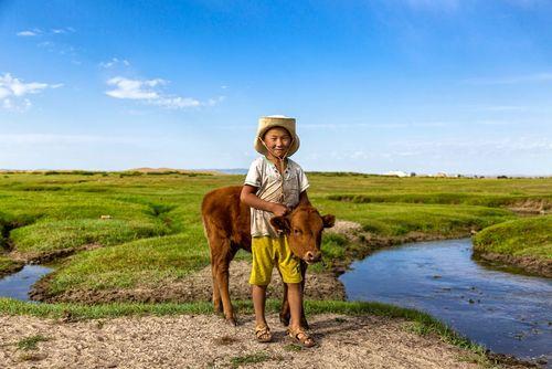 بازی یک پسربچه با گوساله – مغولستان