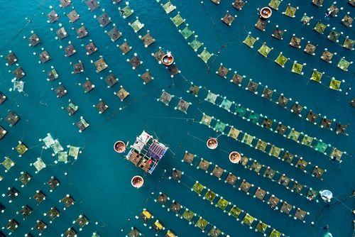 پرورش خرچنگ دریایی در قفس هایی در ساحل استان