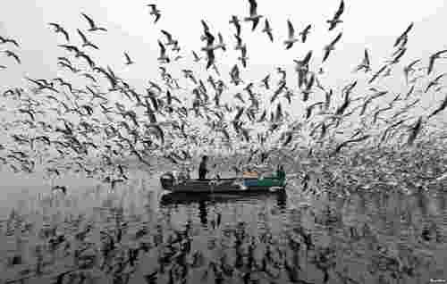 غذا دادن به مرغان دریایی روی رود یامونا در صبح مه گرفته شهر دهلی نو