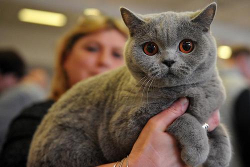 نمایشگاه بین المللی سالانه گربه در جمهوری چک