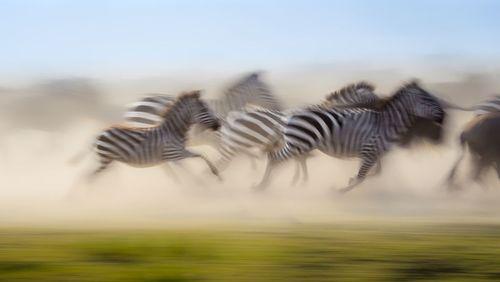 گریز گروه خرها برای عبور از رودخانه مارا در کنیا- عکس روز وب سایت