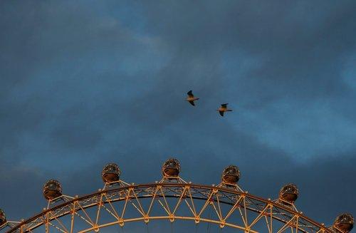 پرواز مرغان دریایی بر فراز چرخ فلک بزرگ لندن