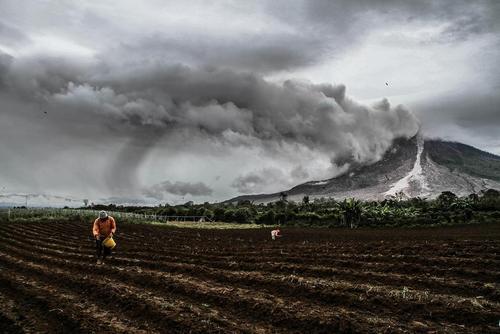 کشاورزی زیر غبارهای آتشفشانی در کارو اندونزی