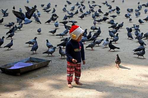 دانه دادن به پرنده ها – کلکته