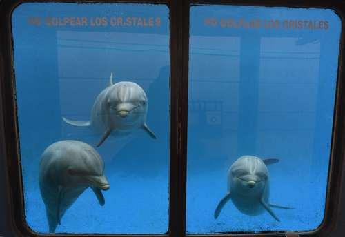 دلفین های آکواریوم باغ وحش مادرید