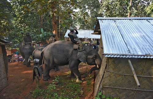 استفاده نیروهای پلیس هند از فیلها برای تخریب خانههای غیرقانونی ساخته شده در اراضی جنگلی در ایالت گواهاتی