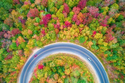 طبیعت پاییزی – جنگلی اطراف بزرگراه