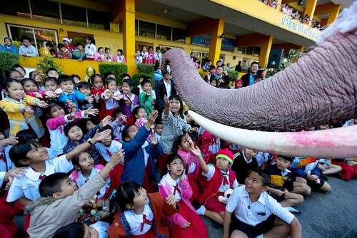 دانش آموزان در حال دریافت هدیه از فیل – تایلند