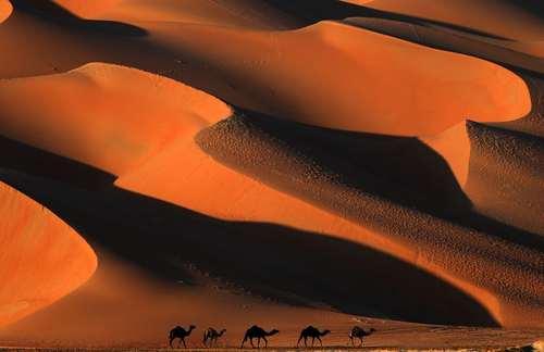 عبور کاروان شترها از صحرای لیوا در امارات متحده عربی