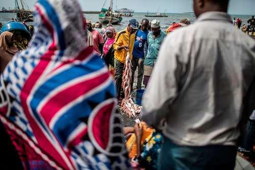 بازار ماهی مالیندی در زنگبار