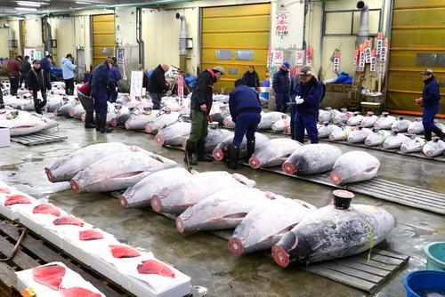 بازار فروش ماهی تن در توکیو ژاپن