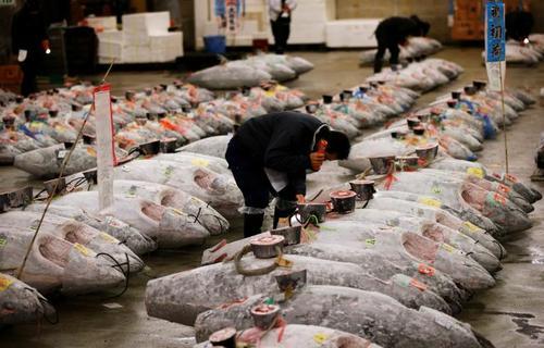 بازار فروش ماهی تون – توکیو
