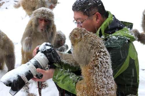 میمون های کنجکاو در کنار یک عکاس طبیعت- چین