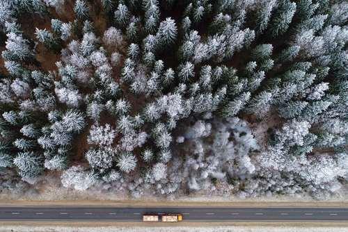 جاده ای کنار جنگلی در بلاروس