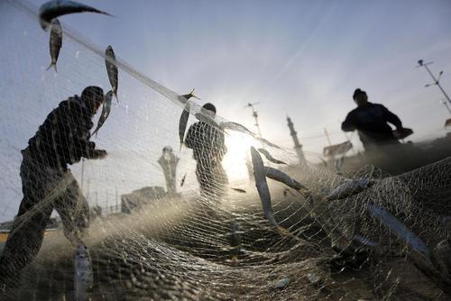 تور ماهیگیری در ساحل باریکه غزه