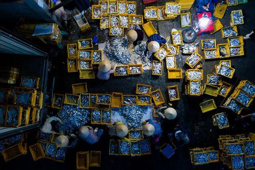 یک بازار ماهی در ویتنام