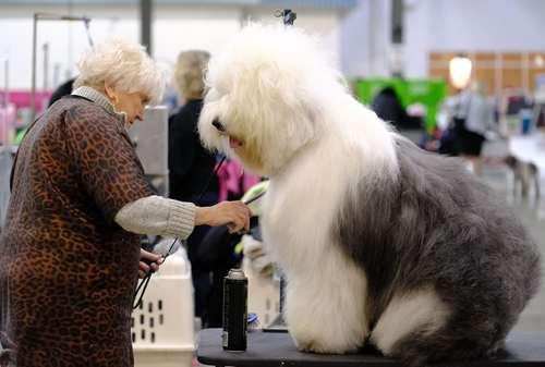 نمایشگاه سالانه سگهای خانگی در شهر پورتلند ایالت اورگان آمریکا