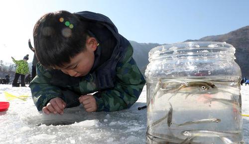 جشنواره ماهیگیری از دریاچه یخی در شهر اینجه کره جنوبی
