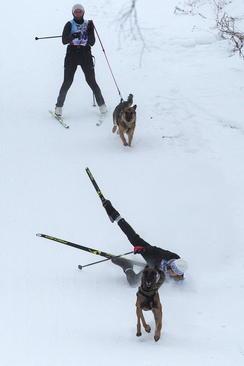 مسابقات اسکی با سگ – اومسک روسیه