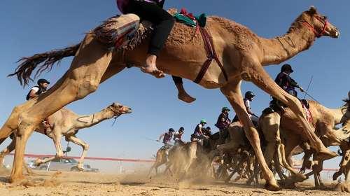 مسابقه شترسواری در جشنواره سالانه