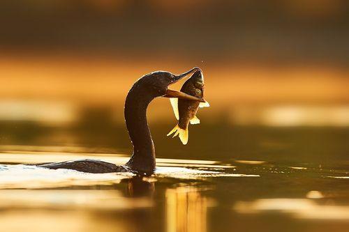 صبحانه یک مرغ دریایی در حوضچهای کوچک در شهر تورنتو کانادا- عکس روز وب سایت