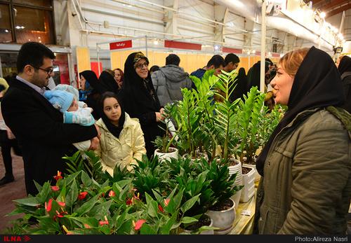 نمایشگاه گل و گیاه در استان قزوین (عکس)