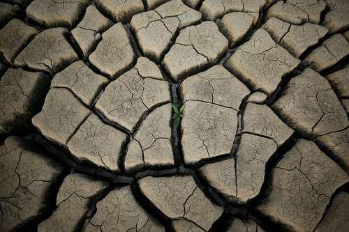 خشکسالی بی سابقه در شهر کیپ تاون آفریقای جنوبی و جیره بندی آب. تصویر رویش یک گیاه را در زمین پشت یک سد خشک شده در حومه پایتخت آفریقای جنوبی را نشان می دهد/ عکس: رویترز