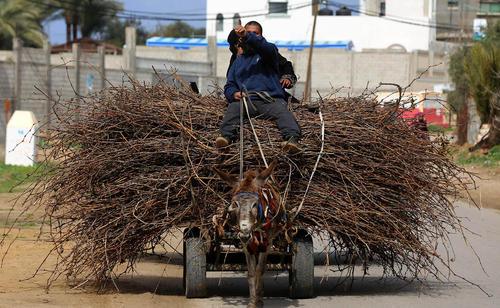 حمل هیزم با استفاده از الاغ- باریکه غزه