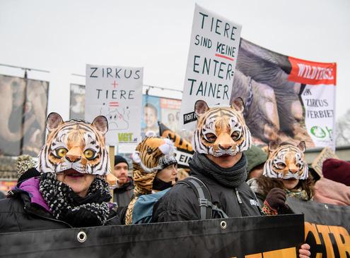 اعتراض فعالان حقوق حیوانات به استفاده از حیوانات در سیرکها در مقابل سیرک شهر مونیخ آلمان