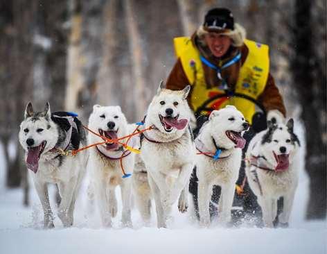 مسابقه 10 کیلومتری سگهای سورتمهران در روسیه