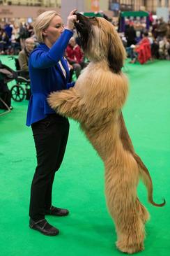 نمایشگاه سالانه سگ در بیرمنگام بریتانیا