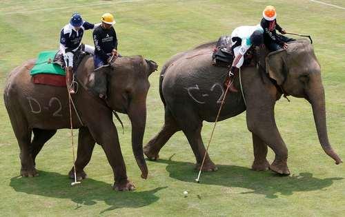 چوگان بازی با فیل- بانکوک
