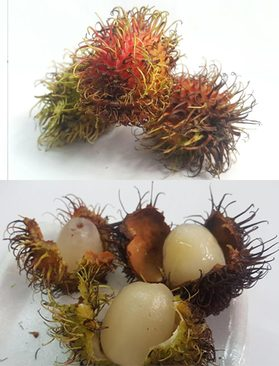 میوه رامبوتان ویتنامی