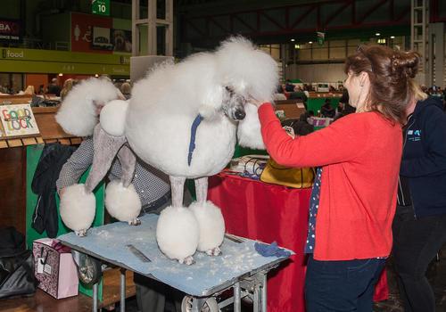 نمایشگاه سالانه سگ های خانگی در بیرمنگام انگلیس