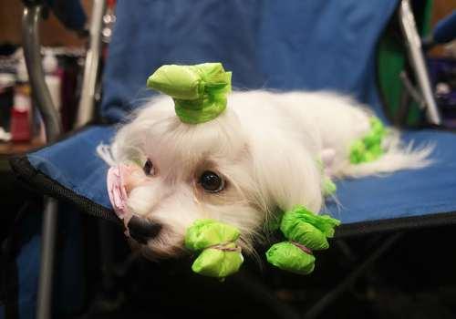 نمایشگاه سالانه سگ های خانگی در بیرمنگام بریتانیا