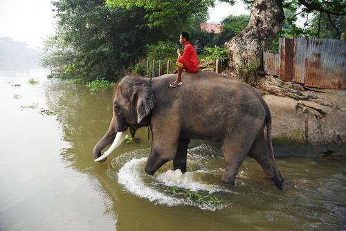 شستشوی فیلها در رودخانه پیش از روز ملی فیلها در تایلند