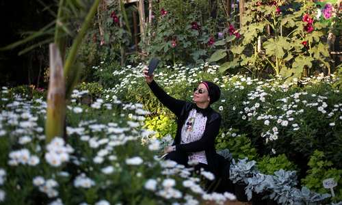جشنواره گلهای بهاری در باغ