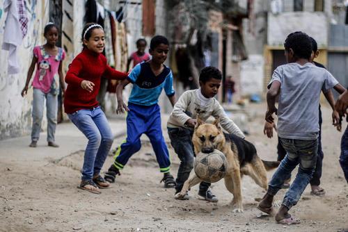 فوتبال بازی کودکان غزهای با یک سگ جرمن شپرد