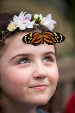 نمایشگاه پروانهها در موزه تاریخ طبیعی بریتانیا در لندن