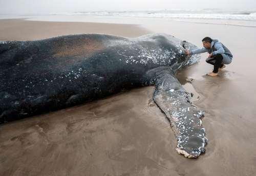 تلاش برای نجات یک وال در سواحل آرژانتین- عکس: شینهوا