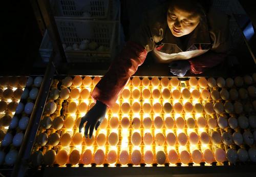 کارخانه تخم نمکی اردک – چین